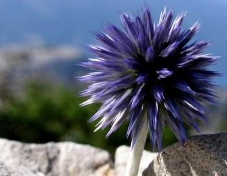 I cvijeće pjeva…svome Stvoritelju..!!