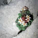 I cvijeće pjeva...svome Stvoritelju..!!